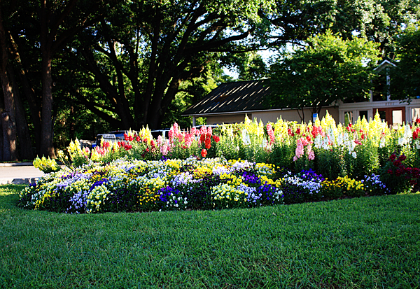 Annuals in garden bed for winter color